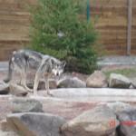 Saarloos – Jardin des Bêtes